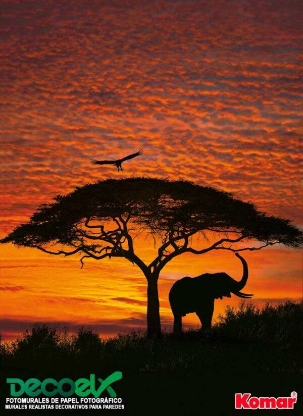 4-501 Atardecer Africano