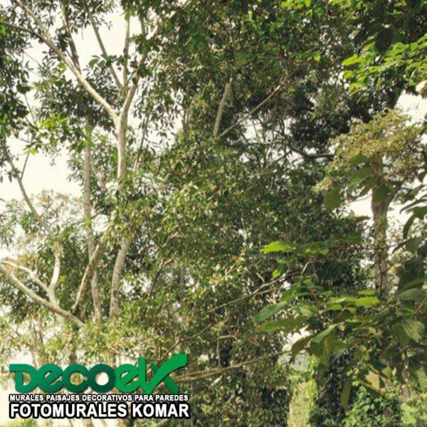 XXL4-024 Zoom selva