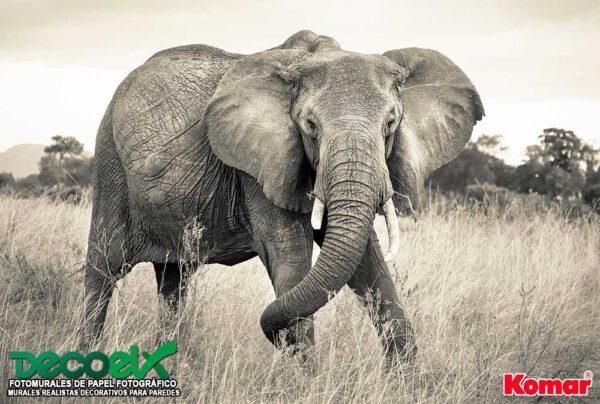 xxl4-529 Elefante