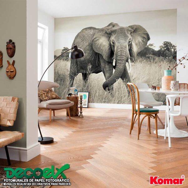 xxl4-529 Interior Elefante