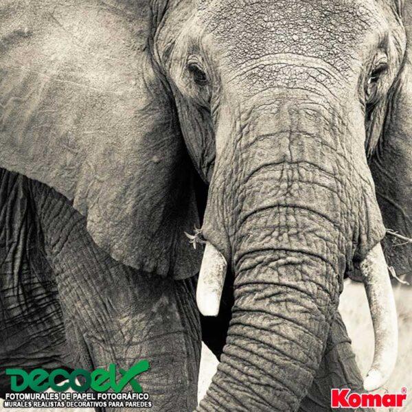 xxl4-529 Zoom Elefante