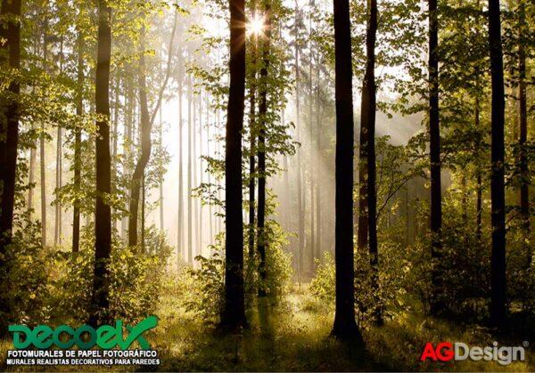 FTS0181 Imagen Bosque en la mañana