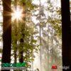 FTS0181 Zoom Bosque en la mañana